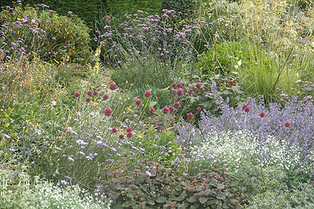 Zonnige graveltuin: Sedum (rood), Salvia, Gypsophylla, Stipa, Allium, Verbena <br /> Beth Chatto Gardens, Essex (UK)